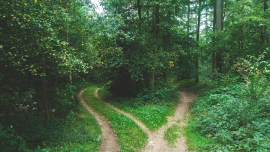decision making blog - two roads diverging in a leafy forest